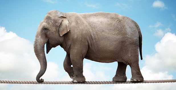 elephant tightrope