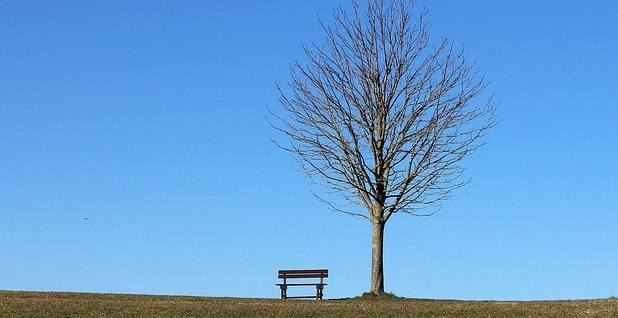 Empty Bench and Tree