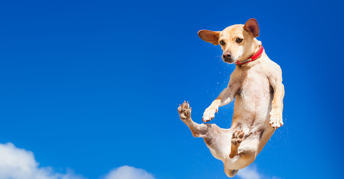 jumping dog hero.jpg