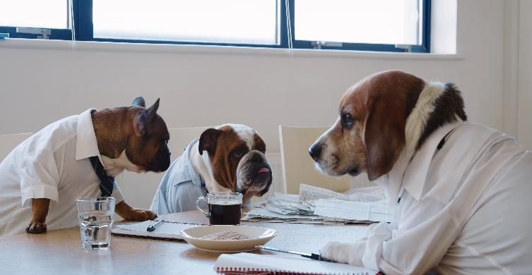 Business Dogs Hero.jpg